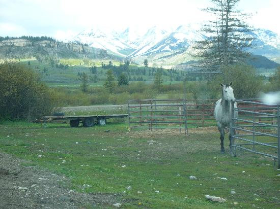 K Bar Z Guest Ranch: The view outside our cabin