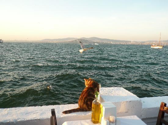 부유카다 사진