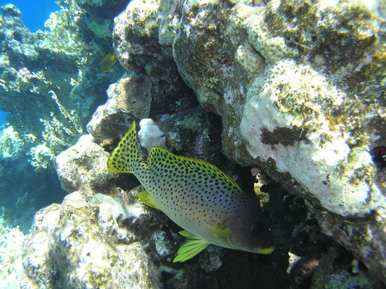 Shamandura Diving : Fish at the local reef