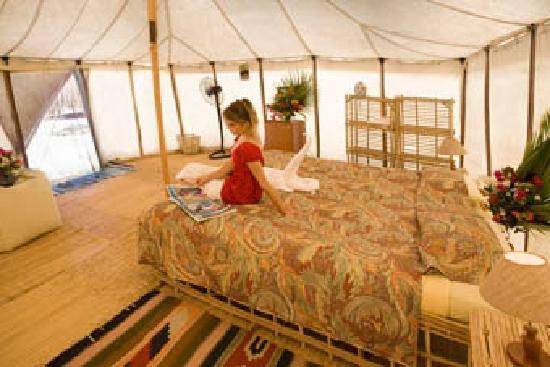 Marsa Shagra Village Royal Tent & Royal Tent - Picture of Marsa Shagra Village Marsa Alam - TripAdvisor