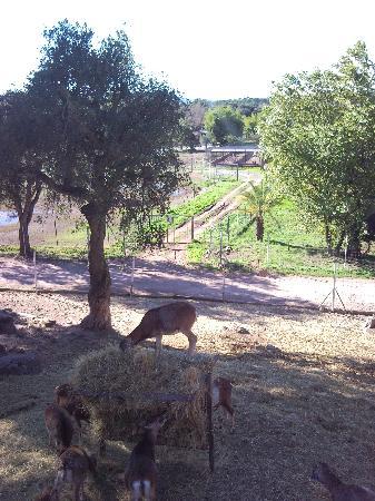 Parc Zoologique de Frejus : mouflon