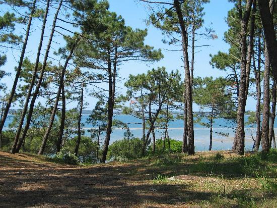 TeleProTour : Arcachon - Vue sur le Bassin depuis le Parc Pereire