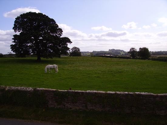 Bay Tree Farm: One of our fields opposite the house