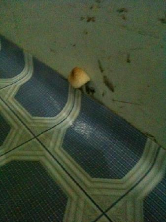 Zara Hotel: yes, there was a mushroom growing out of the floor