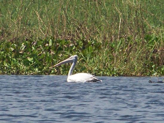Osmose Ecotours: un des oiseaux de la réserve