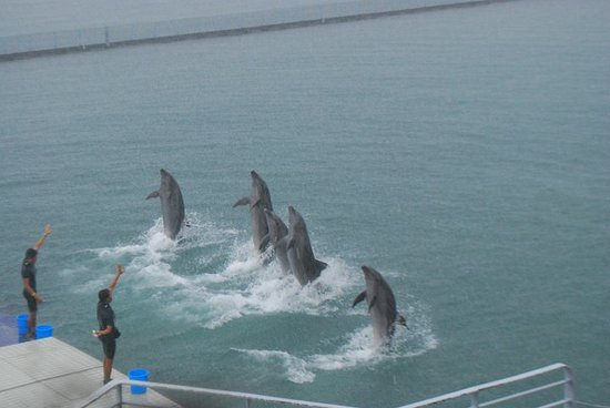 Subic Bay Freeport Zone, Filipinas: Dolphins doing their farewell stint.