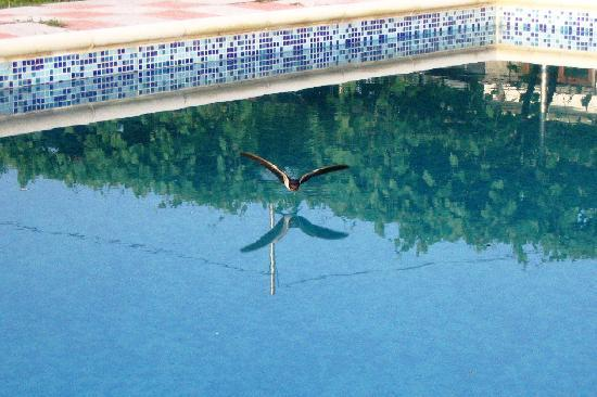 Villa Resen : One of said Swallows