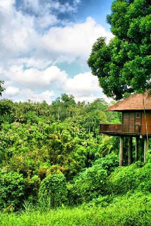 Alila Ubud: الغرفه من نوع  Valley