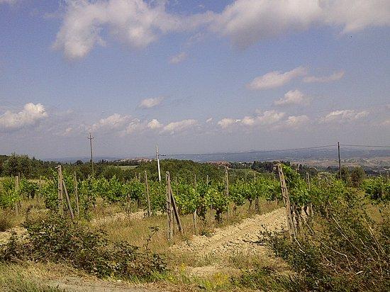 Gambassi Terme, Italia: winery