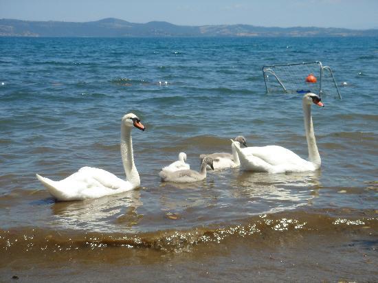 La Gismonda : Cigni sul lago