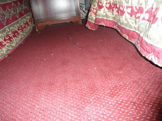 Magnuson Inn: Torn Carpet also dirty