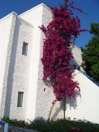 Club Med Kemer: bien fleurie