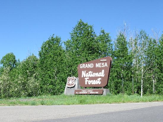 Grand Mesa: Entrance to the Forest