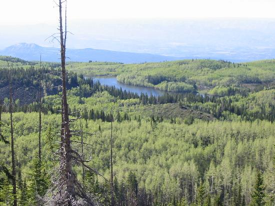 Grand Mesa: One of hundreds of pictures!