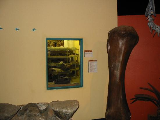 Museum of Western Colorado: Dinosaur Journey Museum : One of the two working labs