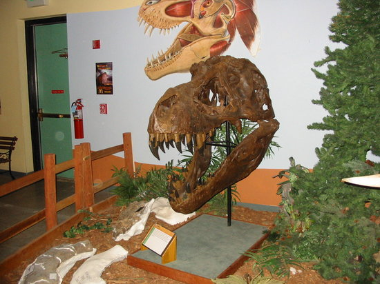 Museum of Western Colorado: Dinosaur Journey Museum : Yes, more Dinosaurs