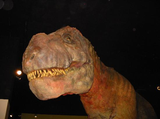 Museum of Western Colorado: Dinosaur Journey Museum : WOW