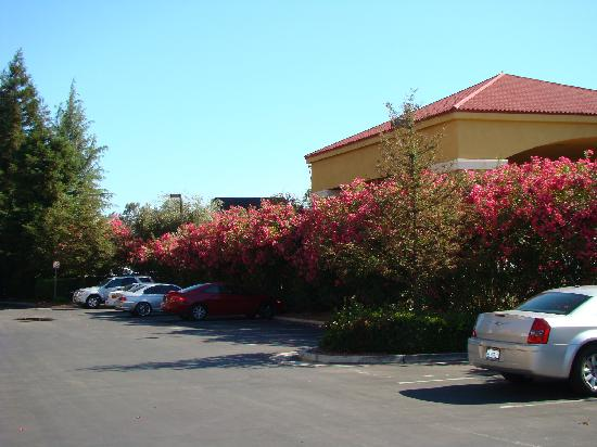 Courtyard Bakersfield : Courtyard by Marriott Bakersfield - car park surrounded by flowers