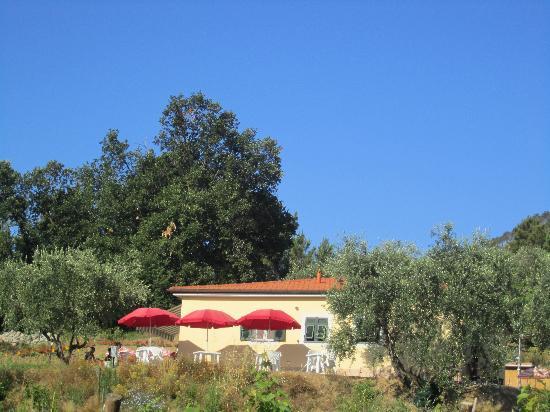 La Collina Verde: il giardino visto dal basso