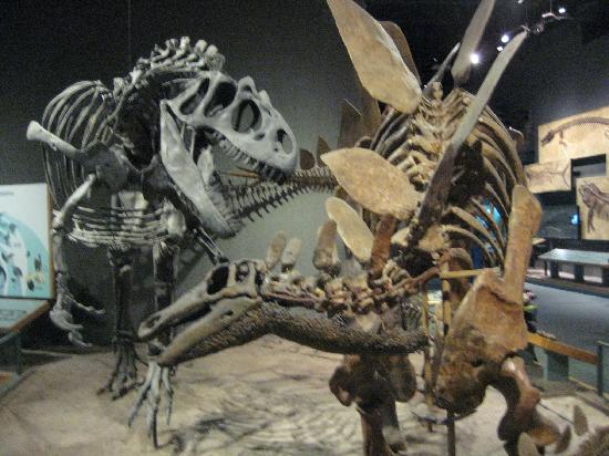 Dinosaur exhibits are at the museum - Picture of Denver Museum of ...