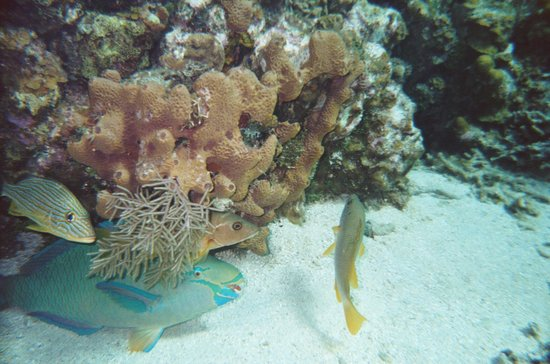 Roatan Vivaro: Diving / Snorkeling the Reef