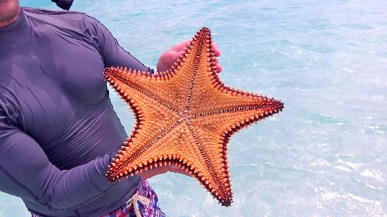 St Francis Resort: Big Starfish