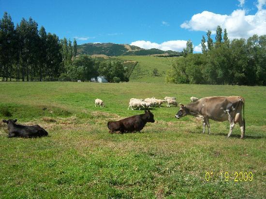 Mingary Farmstay B&B Accommodation : animals