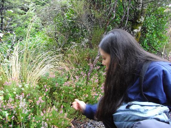 آنز فولكانيك موتل: Rotorua