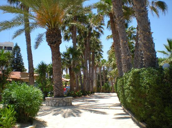 Cavo Maris Beach Hotel: The gardens