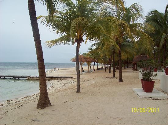 Oasis Palm: playa del hotel