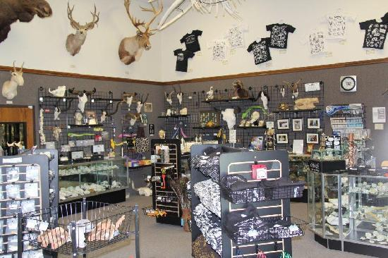 Skulls Unlimited International Inc.: Showroom