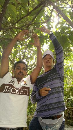 Bali Kadek - Private Tour Driver: At the Coffee Luwak
