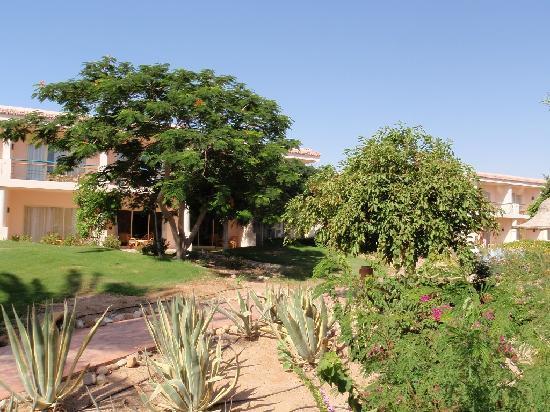 Radisson Blu Resort, Sharm El Sheikh: Radisson Blu, Sharm El Sheik