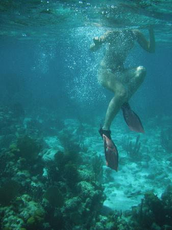Coco Plum Island Resort: Coral reef and myself, snorkeling