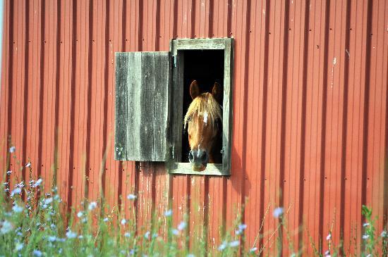 Meadow Creek Mountain Ranch: my mare enjoying her big stall...