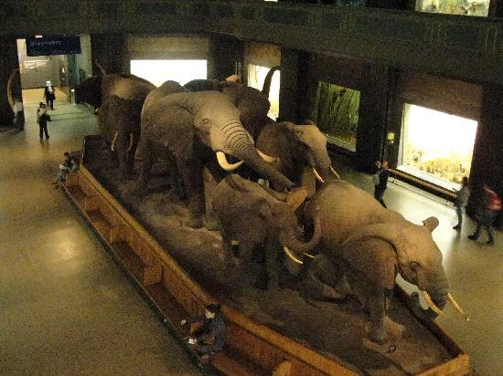 The Natural Museum Of African American History
