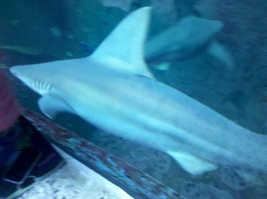 Dallas World Aquarium: The fish