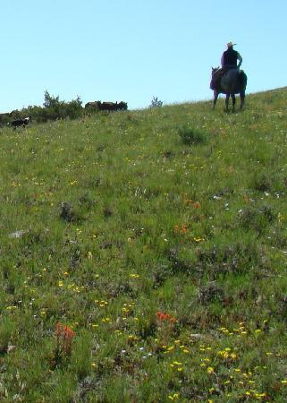 Schively Ranch: High Wide and Lonesome