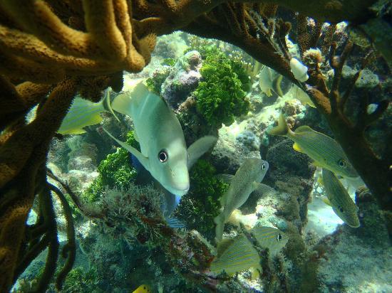Los Roques National Park, เวเนซุเอลา: el mejor snorkeling del mundo