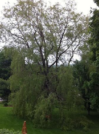 تيوليبس آند ثيستل بيد آند بريكفاست: my husband fell in love with this willow