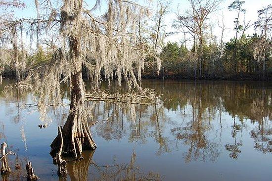 Sam Houston Jones State Park : Great Photo Opps