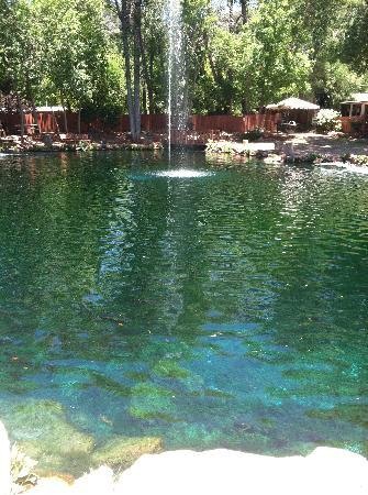 The big pond picture of rainbow trout farm sedona for Big fish pond