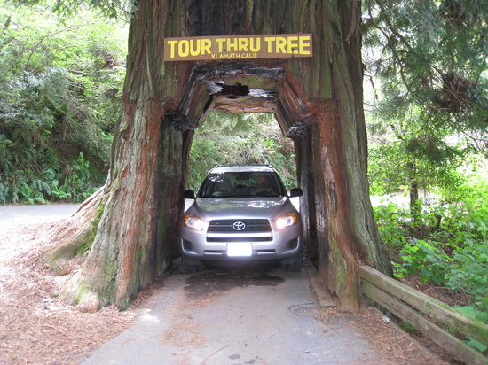 Klamath, CA: Tour-Thru Tree