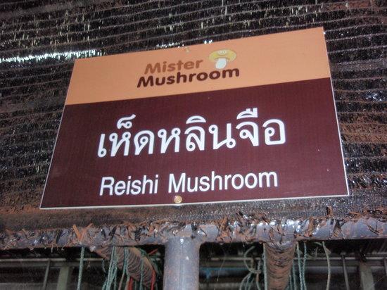 Mister Mushroom