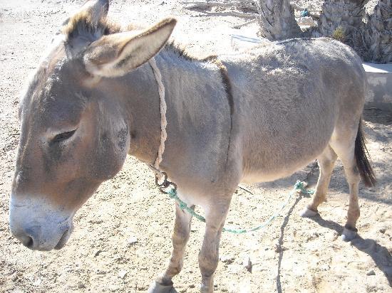 Spa âne