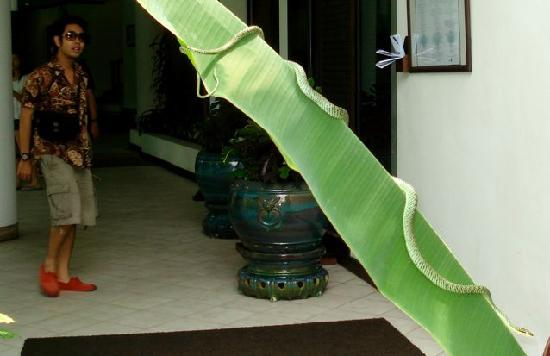 Klaeng, Thailand: Green snake between us and our room