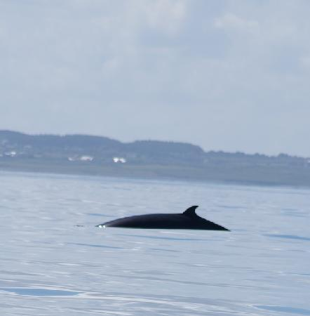 Mullaghmore, أيرلندا: whale watching in Mullaghmore