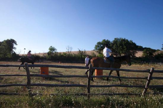 Agriturismo Le Murelle: Il maneggio