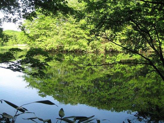 Tomakomai, اليابان: 錦小沼の水面に映る緑