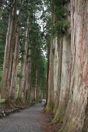 Togakushi Shrine Okusha: 見ごたえがある大杉